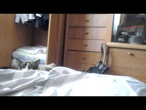 WATCH: Cat Peeking Over Bed Is Our New Favourite Cat Video