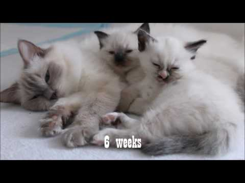 Kittens growing up 1 to 9 weeks