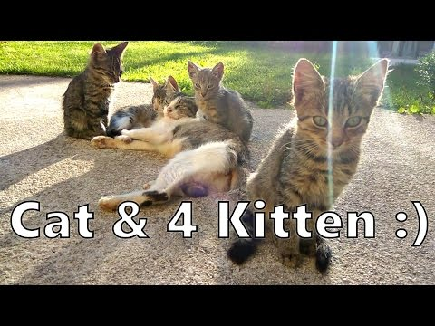 Cute kitten play - adorable funny little kittens playing
