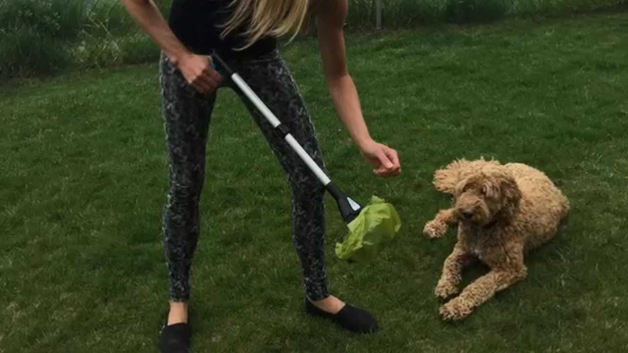 Best Pooper Scooper For Dogs Both Large Small
