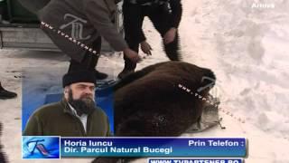 Un urs face prăpăd la Padina - Peştera !