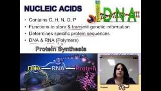 Ch. 2B - Nucleic Acids