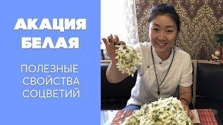 видео Акация (Асаciа)