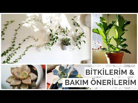 Bitkilerim & Yeni Başlayanlar İçin Bitki Bakım Önerileri!