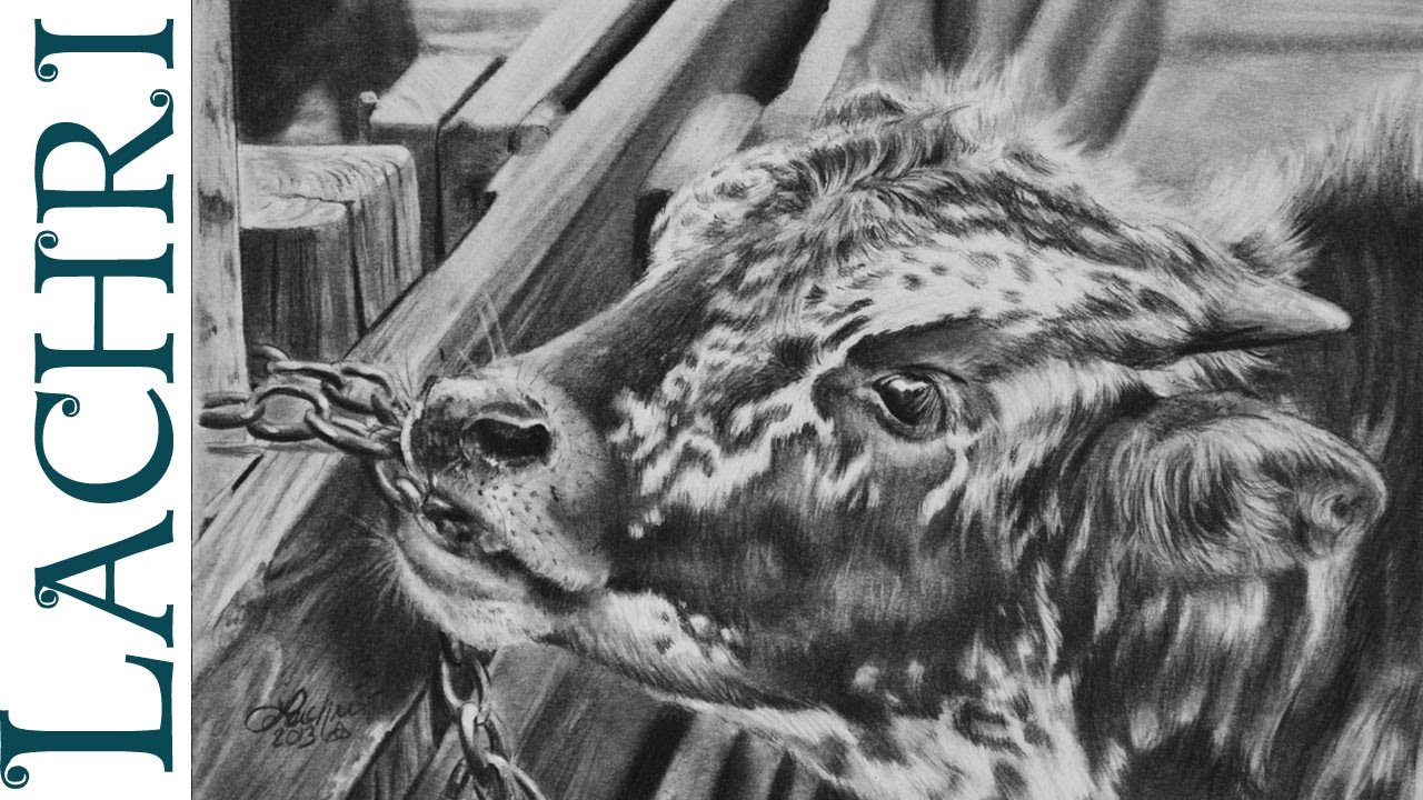 Time Lapse Graphite Pencil Tutorial Baby Texas Longhorn