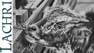 Time Lapse Graphite pencil tutorial - baby Texas Longhorn speed drawing  by Lachri