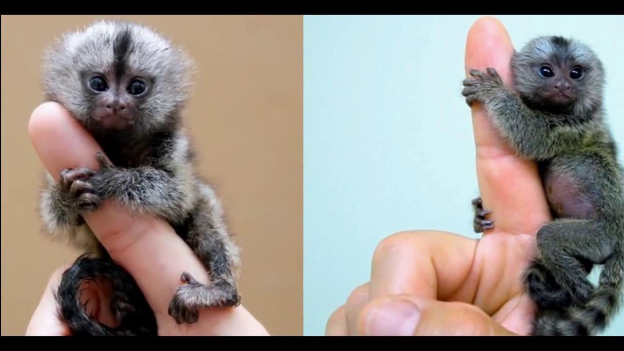 ТОП ПРО Топ 5 самое маленькое животное в мире - YouTube  Самое Маленькое Животное в Мире
