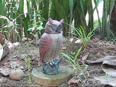 Name The Owl Mascot Contest A BlindOwl Outdoors Expat Philippines Foreigner Lifestyles Video