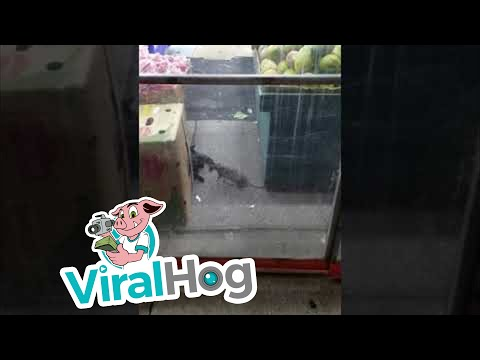 Mike Perry - NYC Standoff: Cat vs. Rat...Who Wins?
