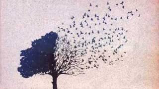Javier Dunn Animal Miike Snow Acoustic Cover with lyrics