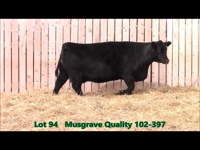 Musgrave Angus Lot 94
