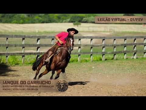 Lote 30 - Ianque do Garrucho