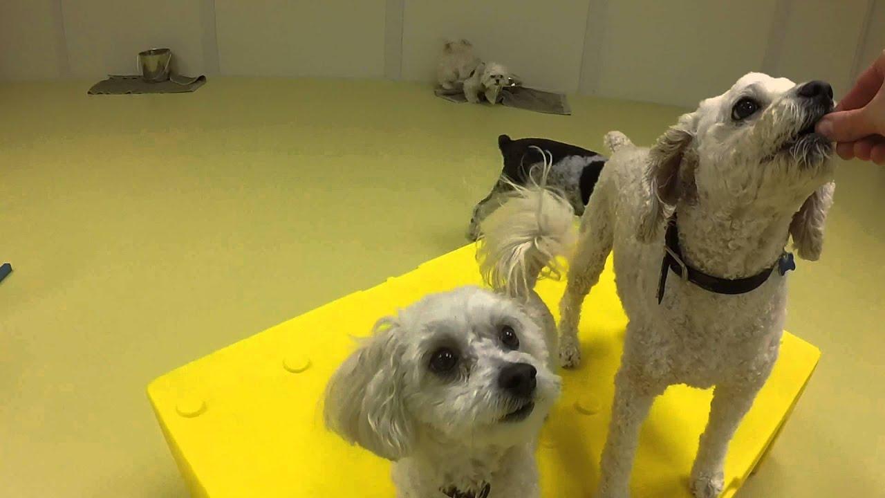 Low Stress Dog Boarding In Nky New Beginnings K 9