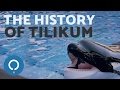 The Story of TILIKUM, the SeaWorld Orca
