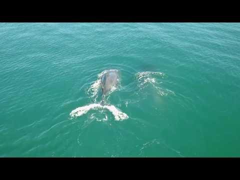 Ariel Whales - Imbonderio Mozambique