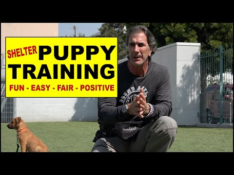 Puppy Training At The Shelter  - The First Things To Teach A Puppy
