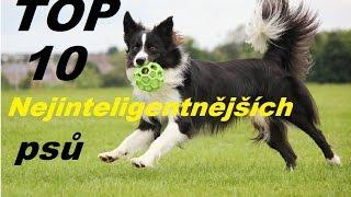 Top 10 Nejinteligentnějších psů