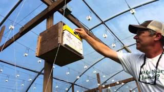 Releasing the bees in the tomato greenhouse so they can help us pollinate.
