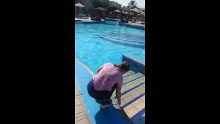 Египет 2019 Отель Sharm Dreams