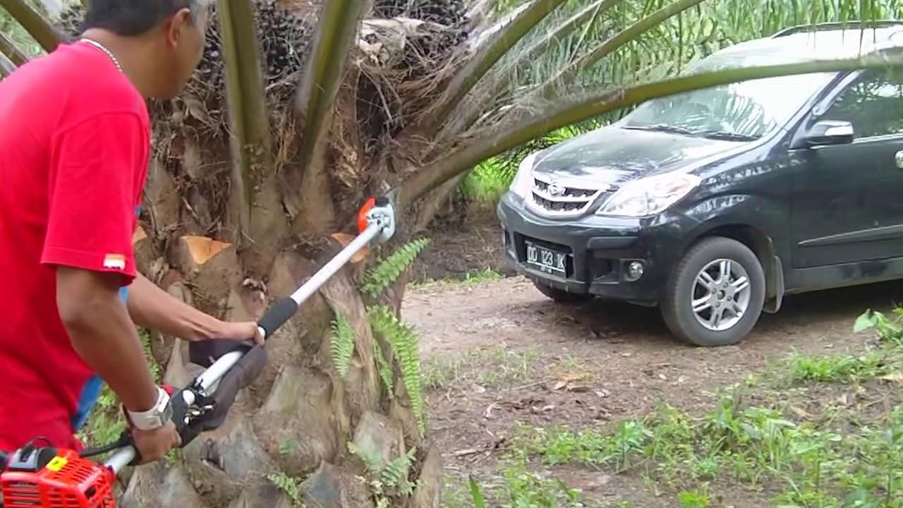 demo mesin pemotong buah dan pelepah sawit - YouTube