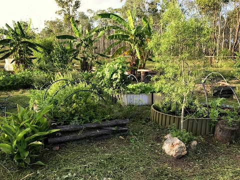 My Young Organic Subtropical Food Forest