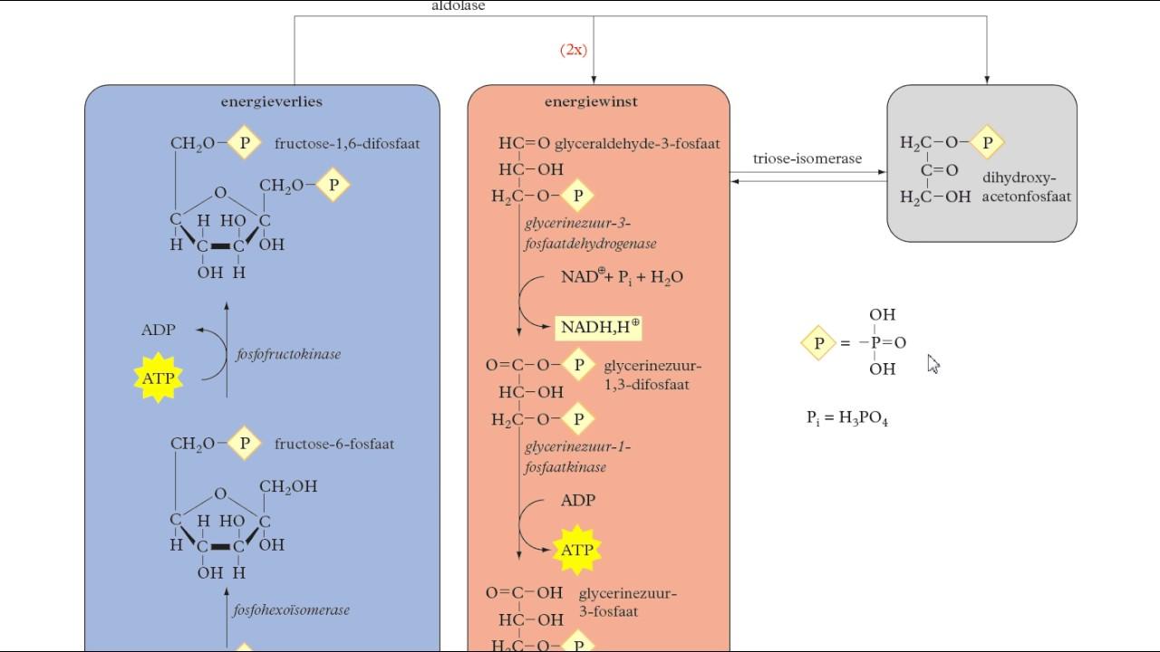 Download Binas tabel 68B - glycolyse en gisting