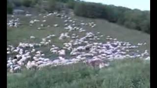 Zapis o selu NOMADI IZ HERCEGOVINE , Запис о селу: Номади из Херцеговине