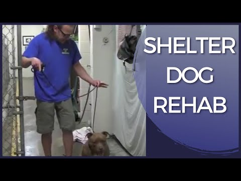 aggressive-dog-rehab-shelter-dog-|-solid-k9-training