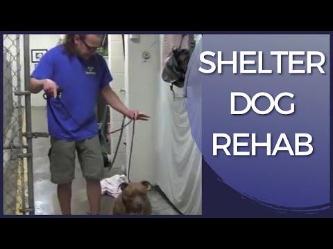 Aggressive Dog Rehab Shelter Dog Solid K9 Training Youtube