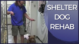 Aggressive Dog Rehab Shelter Dog