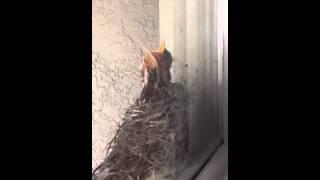 BABY BIRDS!!!