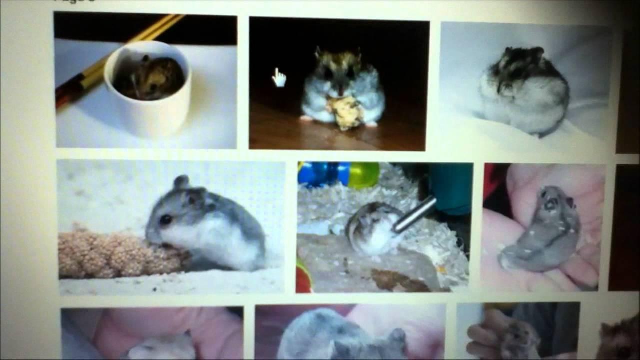Www.x hamster.com