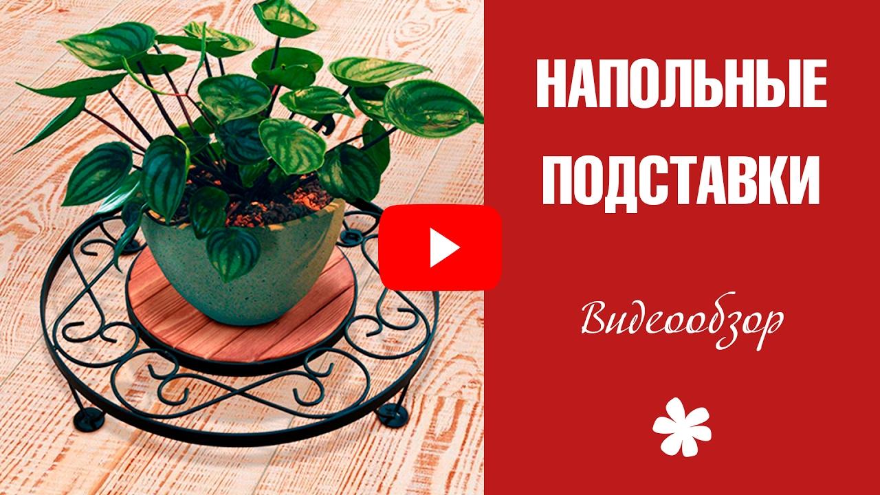 Даже если на улице сыро и холодно, дома, благодаря растениям, остается кусочек лета. Зелень создает атмосферу покоя, а уход за нею позволяет замедлить бег жизни и ощутить себя