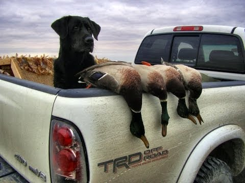 Tribute To A Great Hunting Dog