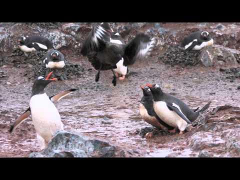Apabullantes imágenes de la Antártida enviadas por @Pakoip