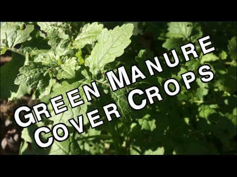 Green Manure Cover Crops Organic Sustainable Soil Fertilizers