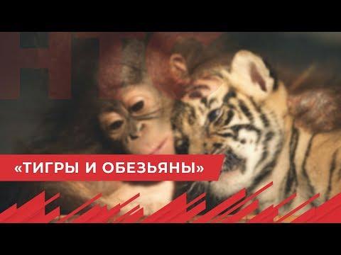 НТС Севастополь: «Тигры и обезьяны»: Китай призвал правильно понимать слова Путина