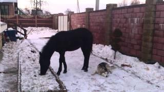Конь и собака