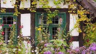 Peaceful Instrumental Music,  Relaxing Meditation Music, Bird Sounds Song Bird Cottage, Tim Janis