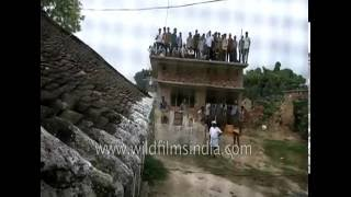 Leopard attack in Gorakhpur, India: people pile onto roof-tops to see the tamasha