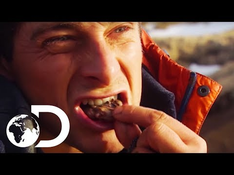 Bear Grylls' Guide To Finding Food In Extreme Environments  Born Survivor: Bear Grylls