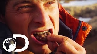 Bear Grylls\' Guide To Finding Food In Extreme Environments | Born Survivor: Bear Grylls