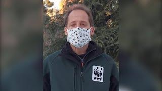 WWF reclama a los líderes mundiales un Marco Global de Biodiversidad ambicioso
