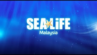 SEA LIFE at LEGOLAND Malaysia Resort (Open Q4 2018...
