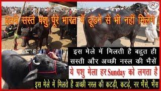 इस मेले में मिलती हैं बहुत ही सस्ती भैंसे, Very inexpensive buffalos meets in this fair