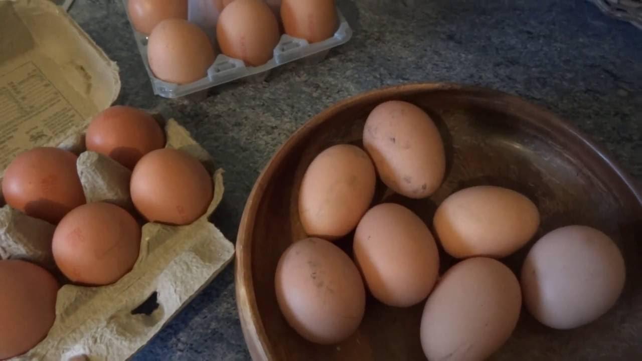 Закладка куриных и утиных яиц в инкубатор Подготовка - YouTube