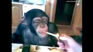 Comedy animals vedio doing strange things /