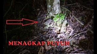 Download Video Keseruan menangkap burung Puyuh di malam hari MP3 3GP MP4