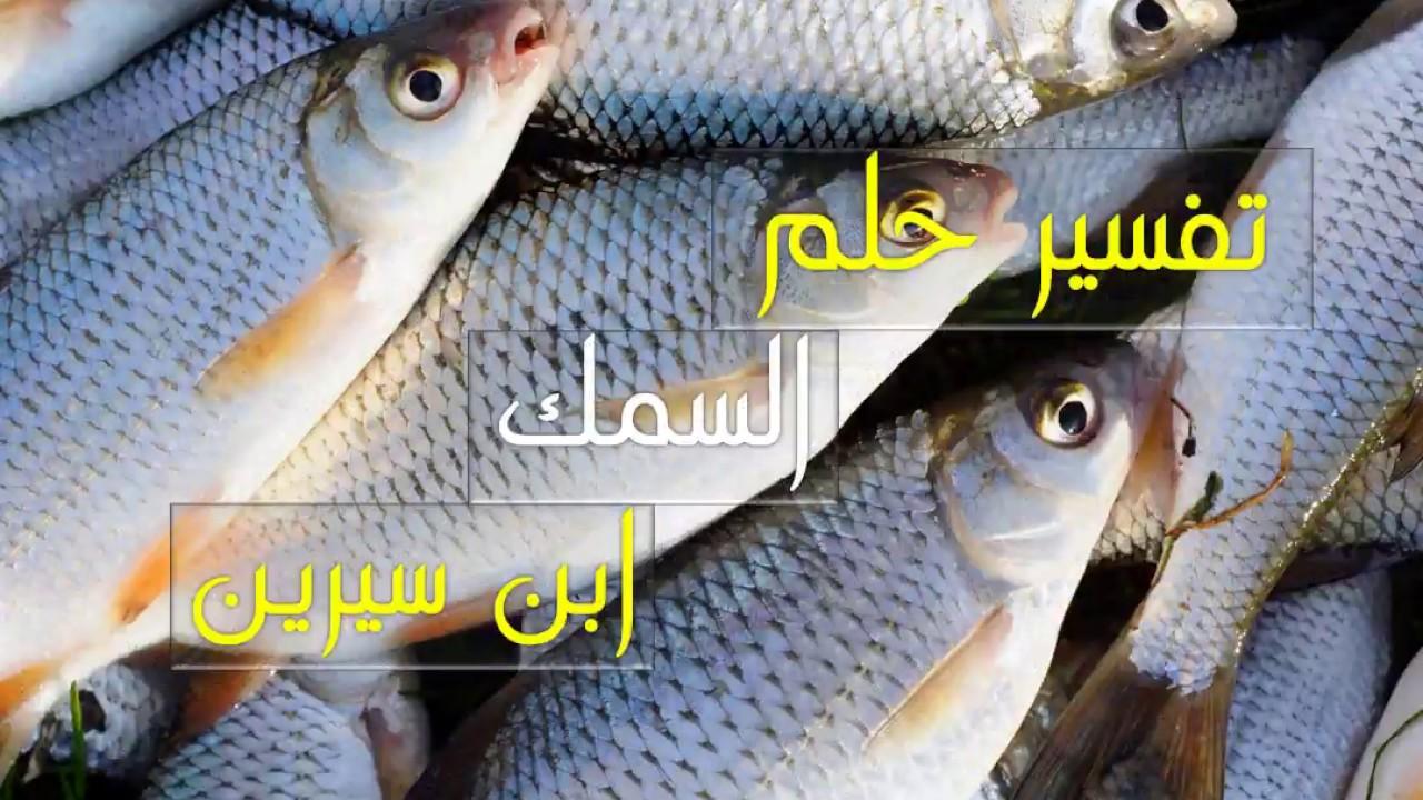 تفسير حلم السمك فى المنام لابن سيرين تفسير حلم السمك للحامل