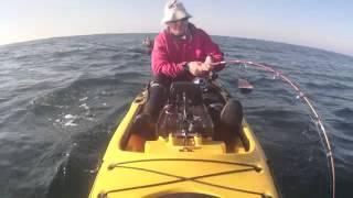 Pesca de Corvina en kayak. 28,6 kgs